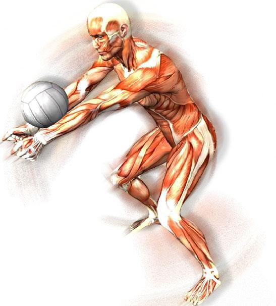 Volley-Body